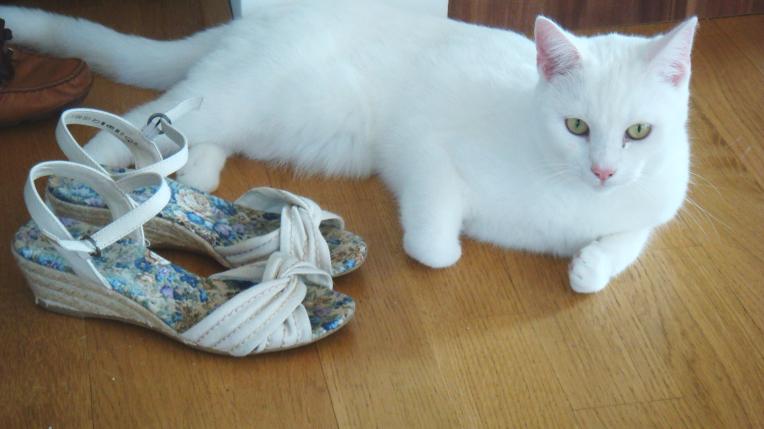 shoesandcat
