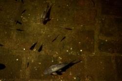 Fish in cistern