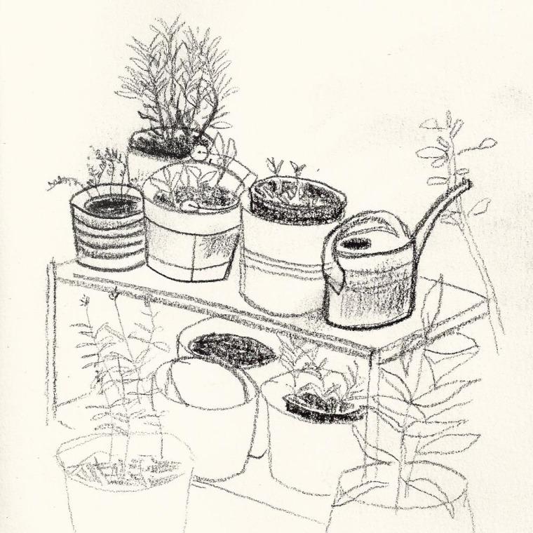 Small Plants