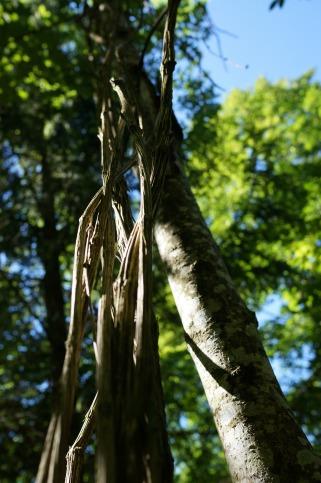 Strange Branches