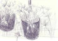 Sketch 19