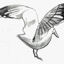 Bird (2)