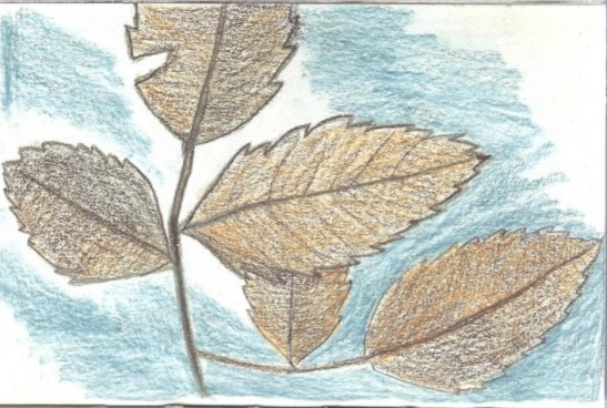 Leaves with Blue Background (2)