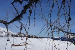 Twigs (2)