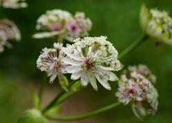 White Flower 2