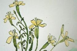 Eild Flowers 6