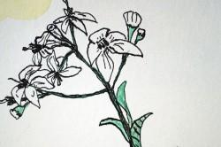 Wild Flower 4