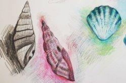 Drei Muscheln