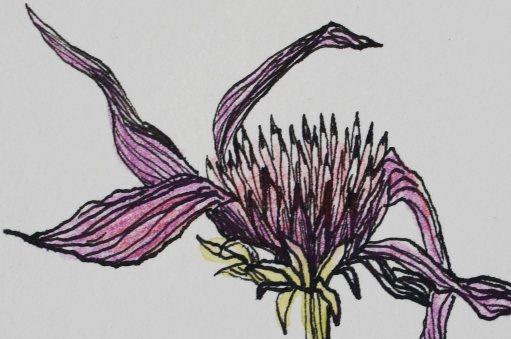 Vertrocknete Blume
