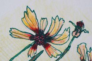Wildblume