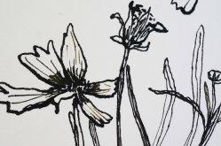 Wildblumen Tuschzeichnung