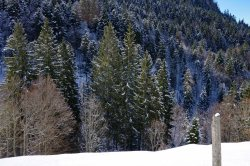 Angezuckerter Wald