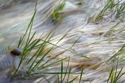Gräser im Bach